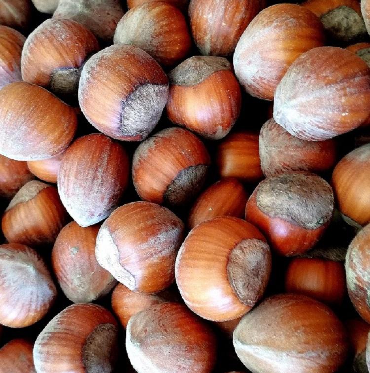 in shell hazelnut 500g